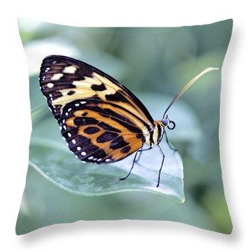 Beautiful Red Cracker Butterfly Throw Pillow