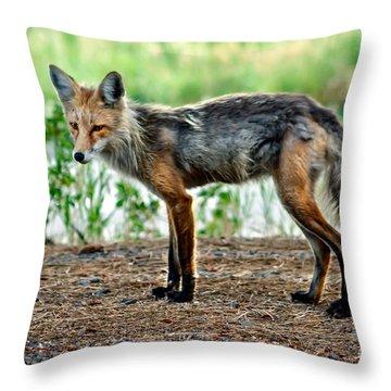 Beautiful Red Fox Throw Pillow by Robert Bales
