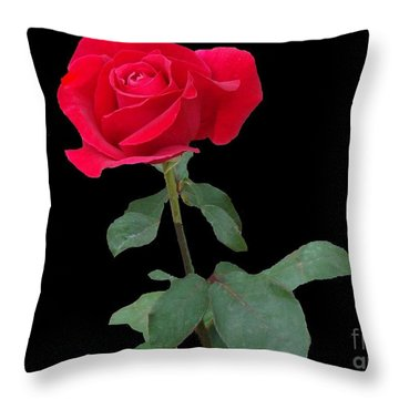 Beautiful Red Rose Throw Pillow by Janette Boyd