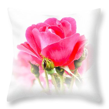 Throw Pillow featuring the photograph Beautiful Rose by Anita Oakley
