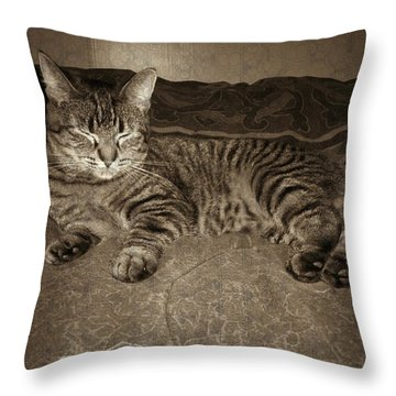 Throw Pillow featuring the photograph Beautiful Tabby Cat by Absinthe Art By Michelle LeAnn Scott