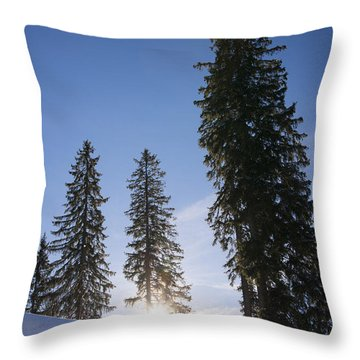 Beautiful Trees On A Sunny Winter Day Throw Pillow by Matthias Hauser