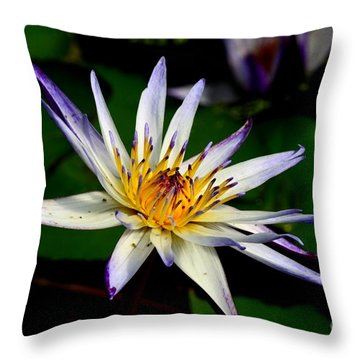 Beautiful Violet White And Yellow Water Lily Flower Throw Pillow