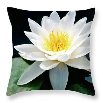 Beautiful Water Lily Capture Throw Pillow by Ed  Riche
