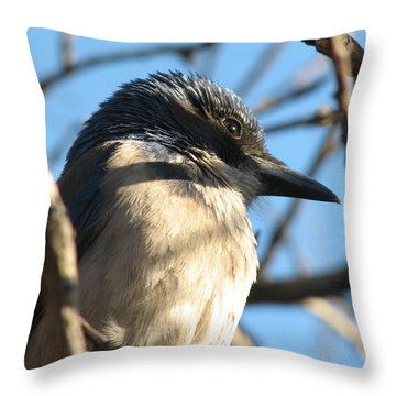 Beautiful Western Scrub Jay Throw Pillow by Patricia Barmatz