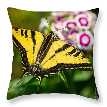 Beautiful Western Tiger Swallowtail Butterfly On Spring Flowers. Throw Pillow by Jamie Pham