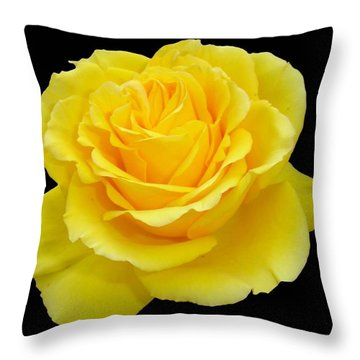Beautiful Yellow Rose Flower On Black Background  Throw Pillow