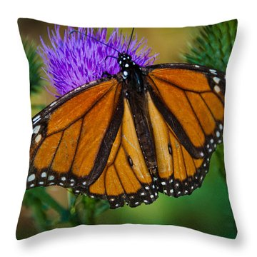 Beautifully Aged Throw Pillow by Cheryl Baxter