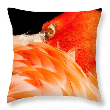 Beauty In Feathers Throw Pillow