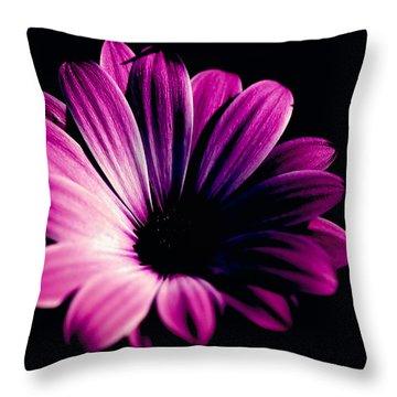 Beauty On The Black #2 Throw Pillow