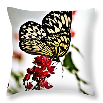 Beauty Wing Throw Pillow by Marty Koch
