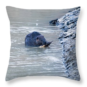 Beaver Chews On Stick Throw Pillow by Chris Flees