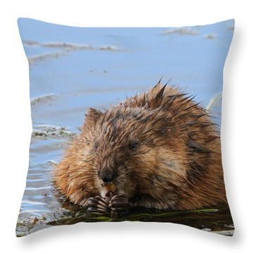 Beaver Portrait Throw Pillow by Dan Sproul
