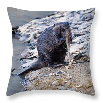 Beaver Sharpens Stick Throw Pillow by Chris Flees