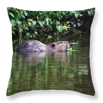 beaver swims in NC lake Throw Pillow by Chris Flees