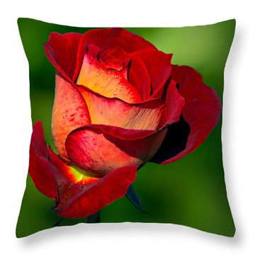 Becoming A Rose Throw Pillow by Tomasz Dziubinski