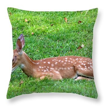 Throw Pillow featuring the photograph Bed And Breakfast by Lorna Rogers Photography