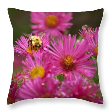 Bee Throw Pillow by Alana Ranney