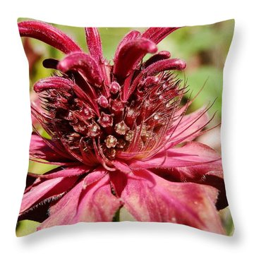 Bee Balm Details Throw Pillow by VLee Watson