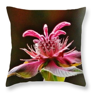 Throw Pillow featuring the photograph Bee Balm's Beauty by VLee Watson