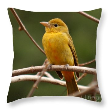 Throw Pillow featuring the photograph Bee Bird by Bob and Jan Shriner