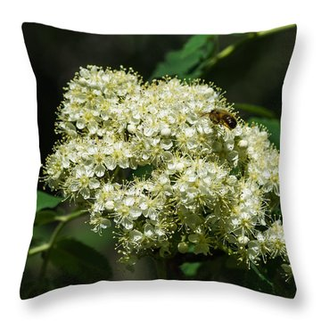 Bee Hovering Over Rowan Truss - Featured 3 Throw Pillow by Alexander Senin