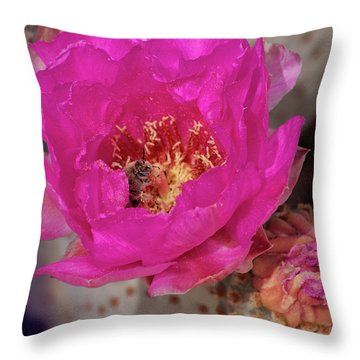 Bee On A Beavertail Throw Pillow