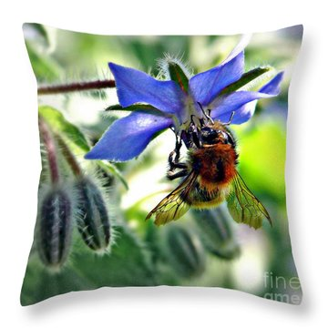 Bee On Borage Throw Pillow by Morag Bates