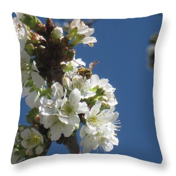 Bee On Cherry Blossoms Throw Pillow