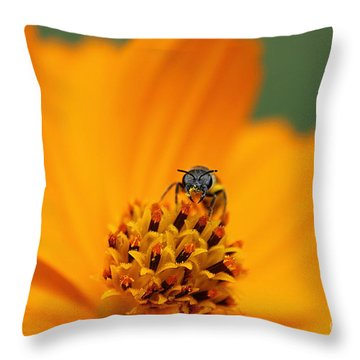 Bee On Cosmo Throw Pillow by Lisa L Silva