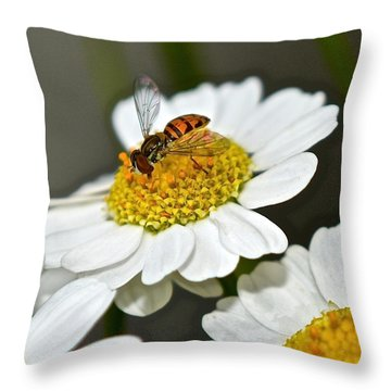Bee On Feverfew Throw Pillow