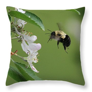 Throw Pillow featuring the photograph Bee With Apple Blossoms by William Selander