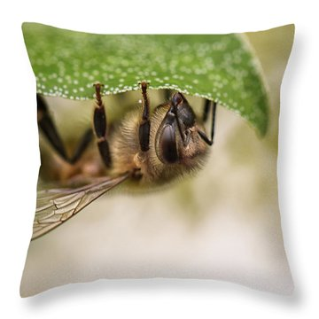 Pollinator Throw Pillows