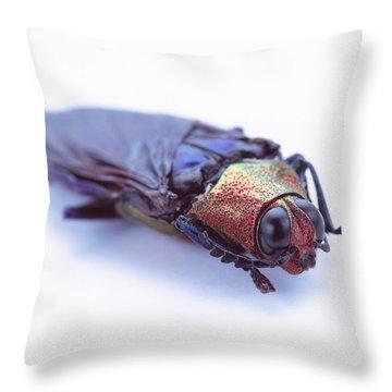 Coleoptera Throw Pillows
