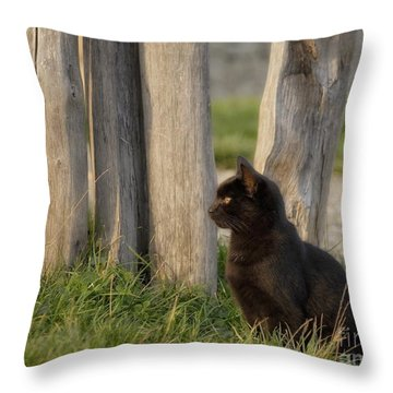 Throw Pillow featuring the digital art Before The Attack by Leo Symon