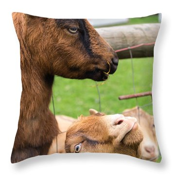 Throw Pillow featuring the photograph Begging For A Bite by Priya Ghose