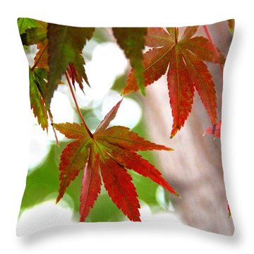 Begining Of The Fall Colors Throw Pillow