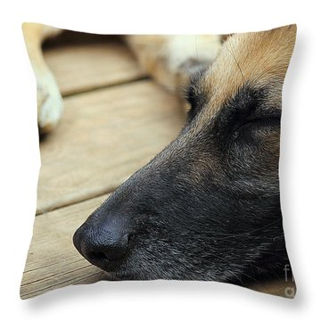 Throw Pillow featuring the photograph Bella by Lisa L Silva