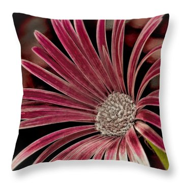 Throw Pillow featuring the photograph Belle Of The Ball by Wallaroo Images