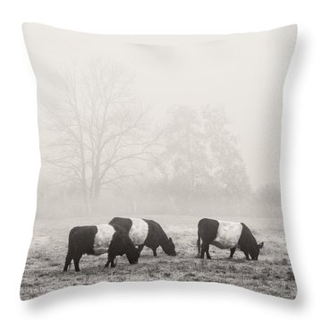 Belted Galloway Cows On Foggy Farm Field In Maine Throw Pillow