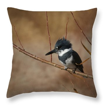 Belted Kingfisher Throw Pillow by Ernie Echols