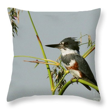Belted Kingfisher On Watch Throw Pillow by Myrna Bradshaw