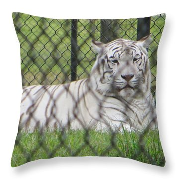 Bengal White Tiger Throw Pillow by Sonali Gangane
