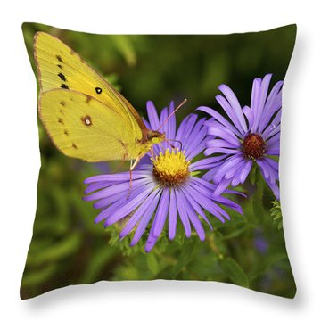 Throw Pillow featuring the photograph Best Friends - Sulphur Butterfly On Asters by Jane Eleanor Nicholas