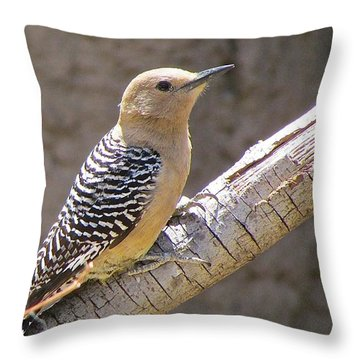 Throw Pillow featuring the photograph Between Bites by Brenda Pressnall
