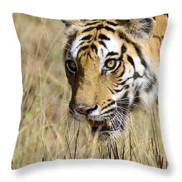 Beware Throw Pillow by Fotosas Photography