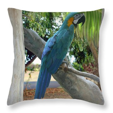 Beyond The Window Throw Pillow by Bob Hislop