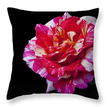 Throw Pillow featuring the photograph Bicolour Beauty by Doug Norkum