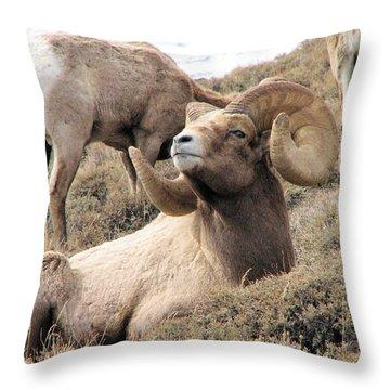 Big Bighorn Ram Throw Pillow