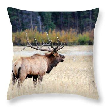 Big Colorado Bull Throw Pillow